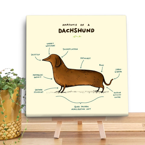 Anatomy of a Dachshund Canvas Mini by Sophie Corrigan