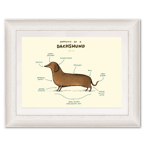 Anatomy of a Dachshund SC01 Original Print by Sophie Corrigan