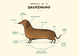Anatomy of a Dachshund SC01