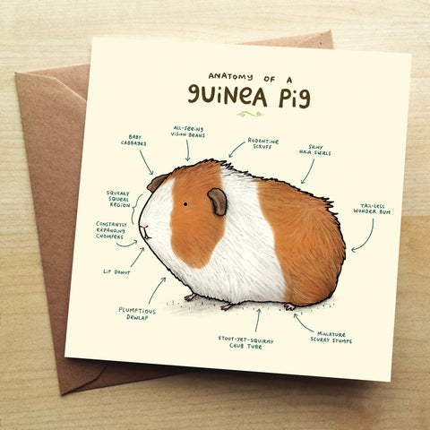 Anatomy Of A Guinea Pig SC03G Greetings Card by Sophie Corrigan