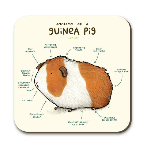 Anatomy of a Guinea Pig SC03C Coaster by Sophie Corrigan