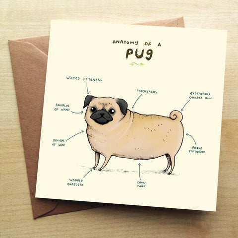 Anatomy Of A Pug SC05G Greetings Card by Sophie Corrigan