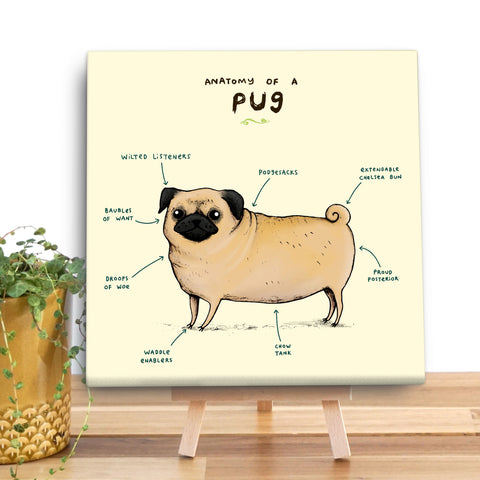 Anatomy of a Pug Canvas Mini by Sophie Corrigan