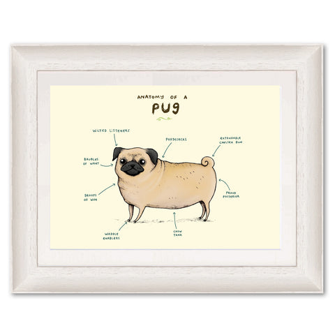 Anatomy of a Pug SC05P Original Print by Sophie Corrigan