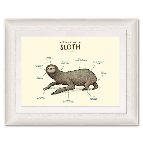 Anatomy of a Sloth SC06P Original Print by Sophie Corrigan