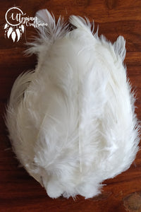 100 pcs White Colour Chicken Feathers by Utopian Craftsmen - Utopian Craftsmen