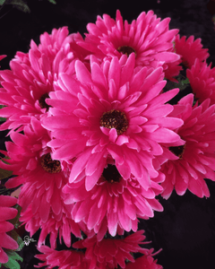 Dark shade of Pink Colour Gerbera exotic artificial flowers online available at www.utopiancraftsmen.com at best prices with free shipping above 999 Rs
