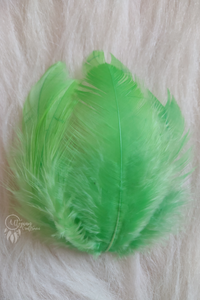 100 pcs Parrot Green Colour Chicken Feathers by Utopian Craftsmen - Utopian Craftsmen