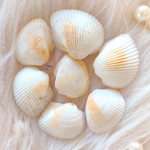 Sea Shells by Utopian Craftsmen - 50 Grams (10 Pieces) - Utopian Craftsmen