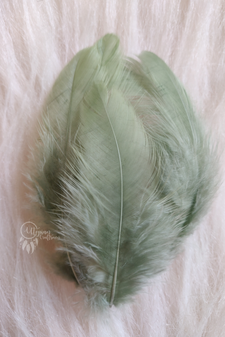 Sage Green Colour Chicken Feathers For Crafts (Approx 100 pieces per packet) - Utopian Craftsmen