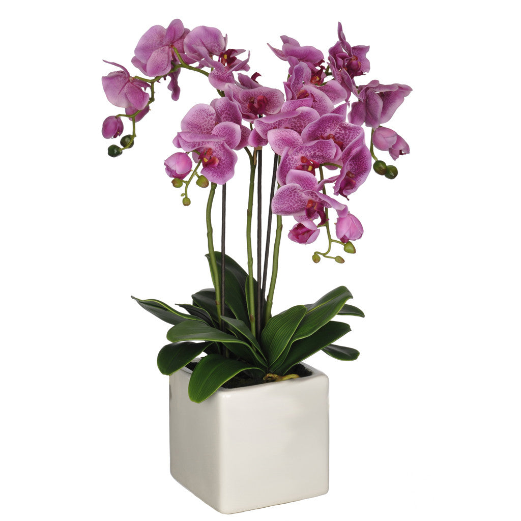 Artificial Triple-Stem Phalaenopsis Orchid in Cube Ceramic - House of Silk Flowers®  - 9
