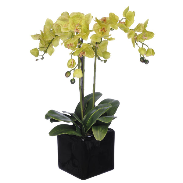 Artificial Triple-Stem Phalaenopsis Orchid in Cube Ceramic - House of Silk Flowers®  - 3