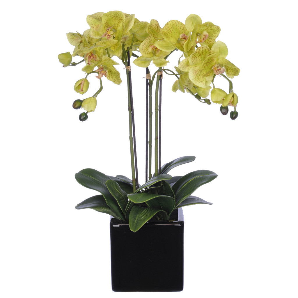 Artificial Triple-Stem Phalaenopsis Orchid in Cube Ceramic - House of Silk Flowers®  - 4