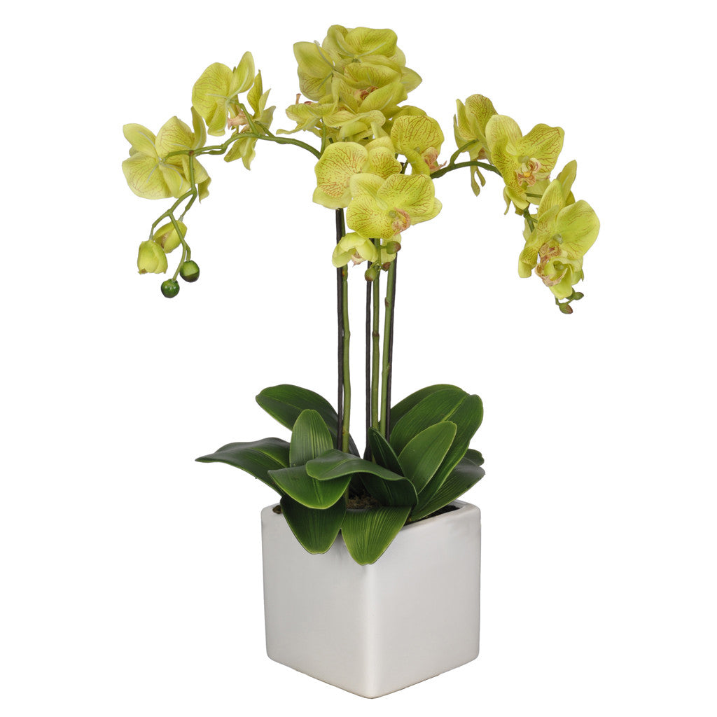 Artificial Triple-Stem Phalaenopsis Orchid in Cube Ceramic - House of Silk Flowers®  - 11