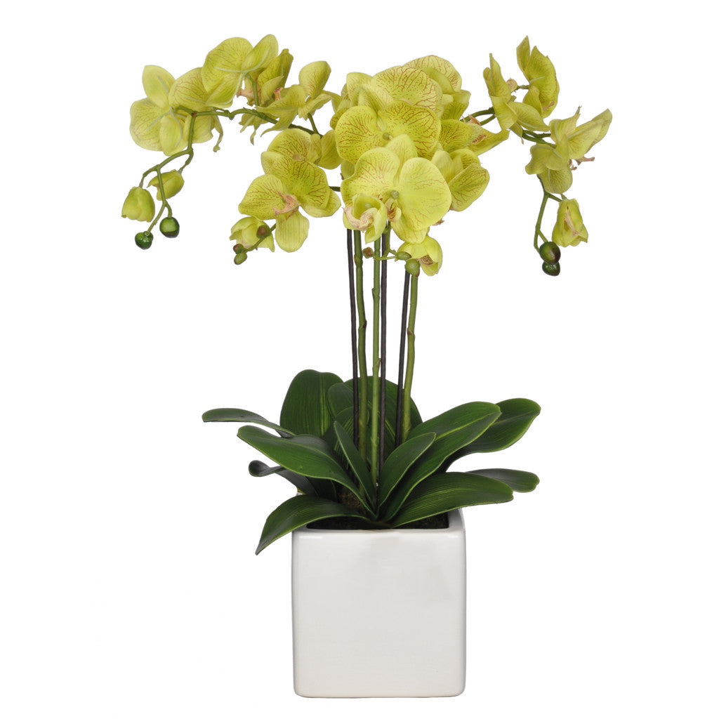 Artificial Triple-Stem Phalaenopsis Orchid in Cube Ceramic - House of Silk Flowers®  - 12