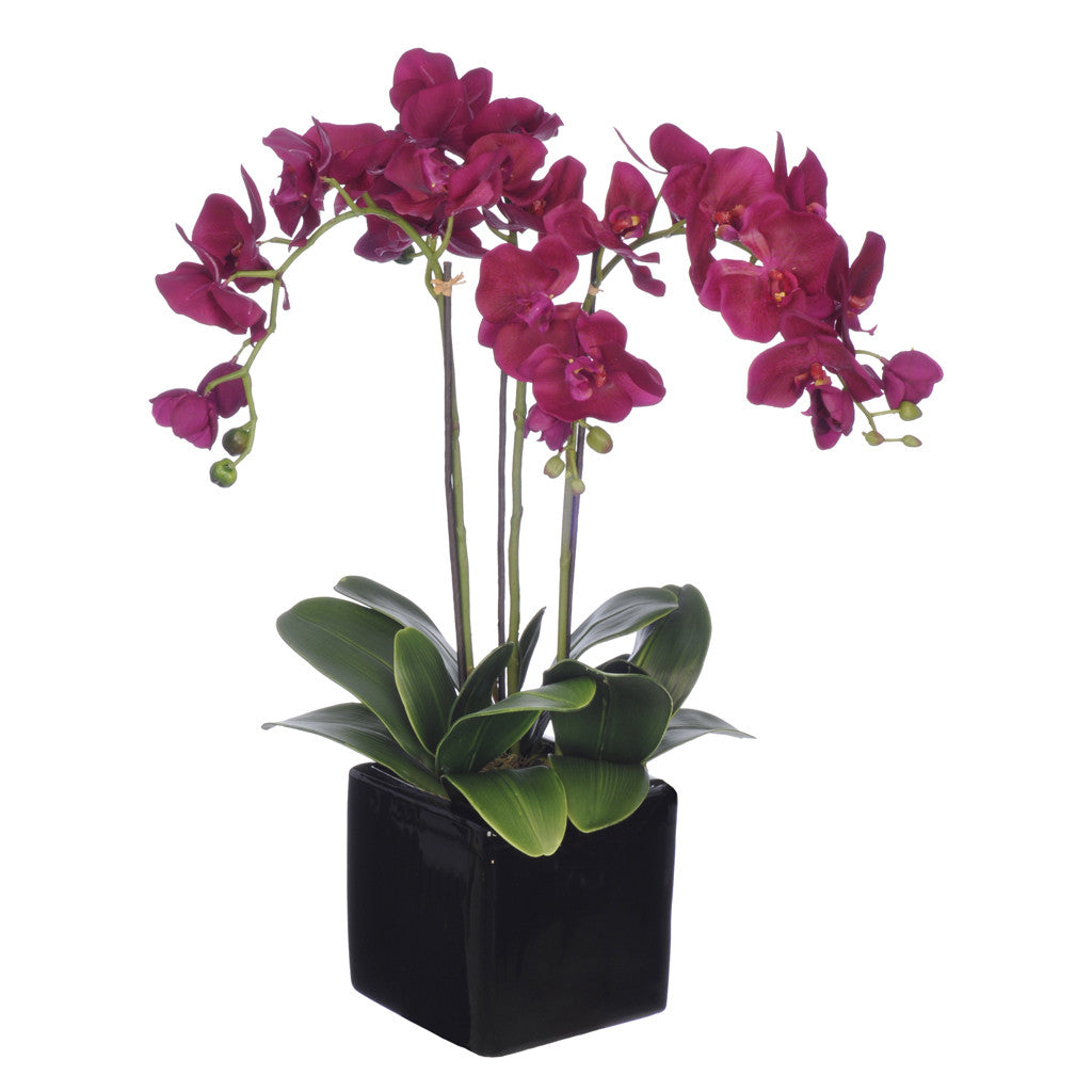 Artificial Triple-Stem Phalaenopsis Orchid in Cube Ceramic - House of Silk Flowers®  - 17