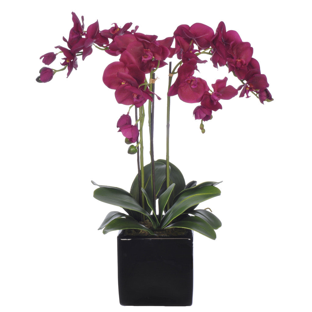 Artificial Triple-Stem Phalaenopsis Orchid in Cube Ceramic - House of Silk Flowers®  - 18