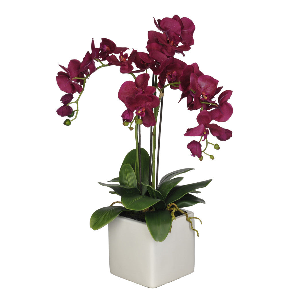 Artificial Triple-Stem Phalaenopsis Orchid in Cube Ceramic - House of Silk Flowers®  - 19