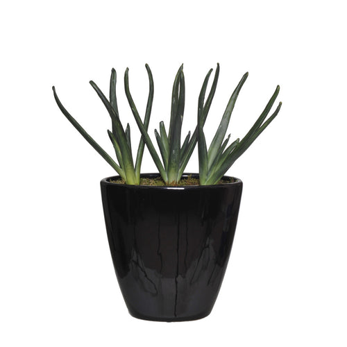 Artificial Baby Aloe Garden in Black Ceramic - House of Silk Flowers®