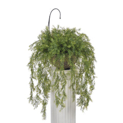 Artificial Asparagus Fern Hanging Basket - House of Silk Flowers®