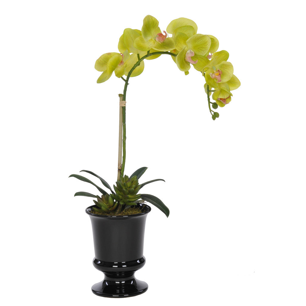 Artificial Phalaenopsis Orchid in Black Ceramic Urn - House of Silk Flowers®  - 2