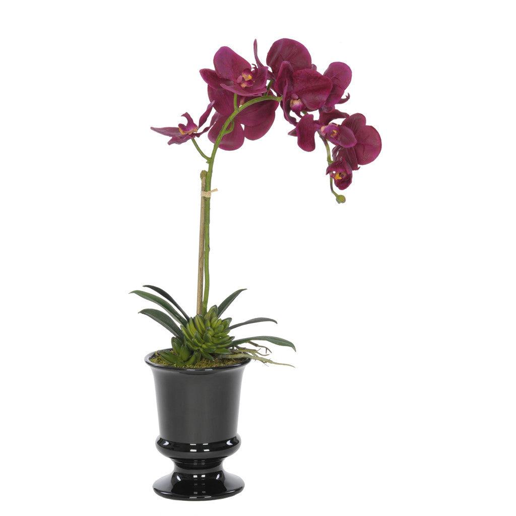 Artificial Phalaenopsis Orchid in Black Ceramic Urn - House of Silk Flowers®  - 6