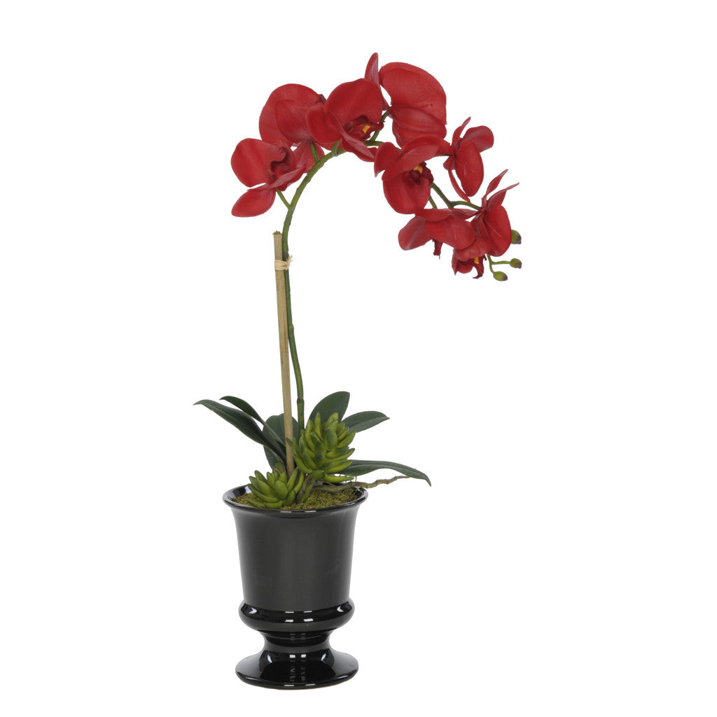 Artificial Phalaenopsis Orchid in Black Ceramic Urn - House of Silk Flowers®  - 1