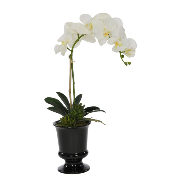 Artificial Phalaenopsis Orchid in Black Ceramic Urn