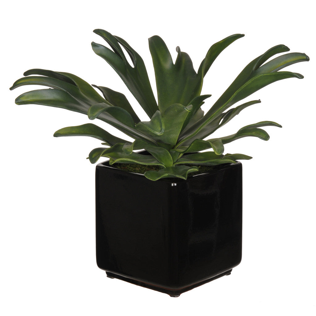 Artificial Staghorn Succulent in Cube Ceramic - House of Silk Flowers®  - 1