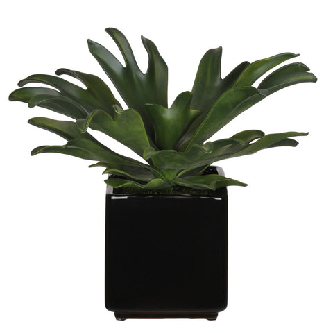 Artificial Staghorn Succulent in Cube Ceramic