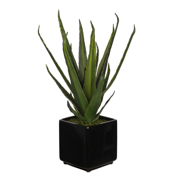 Artificial Aloe Succulent in Cube Ceramic