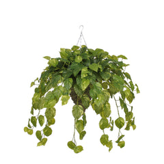 Artificial Real Touch Pothos Hanging Basket - House of Silk Flowers®  - 2