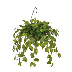 Artificial Real Touch Pothos Hanging Basket - House of Silk Flowers®  - 1