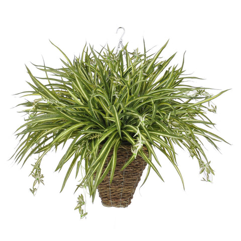Artificial Spider Hanging Basket - House of Silk Flowers®  - 4
