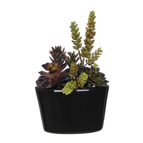 Artificial Succulent Garden in Gloss Black Oval Ceramic
