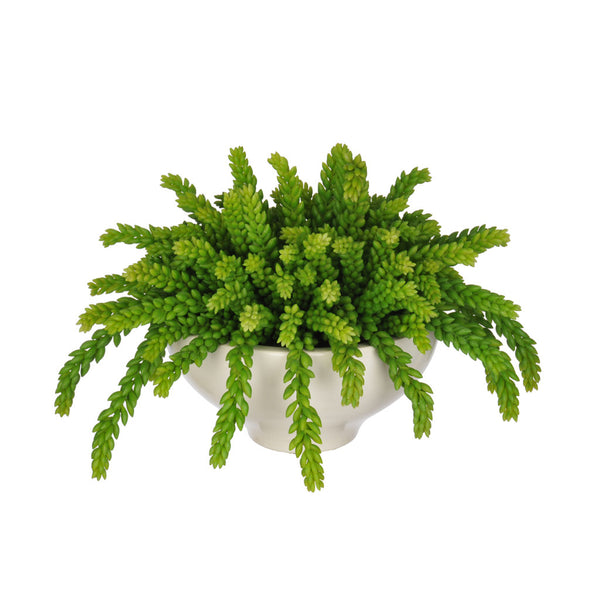 Artificial Green Sedum Succulent in Ceramic Bowl