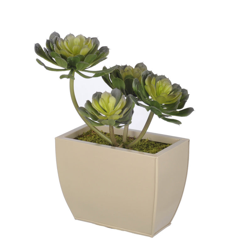 Artificial Aeonium Succulent in Planter - House of Silk Flowers®  - 2