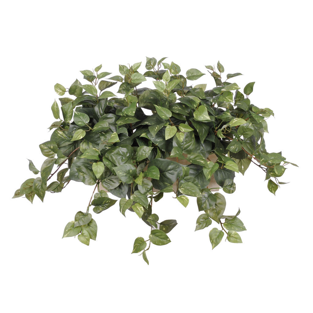 Artificial Pothos in White-Wash Wood Ledge - House of Silk Flowers®