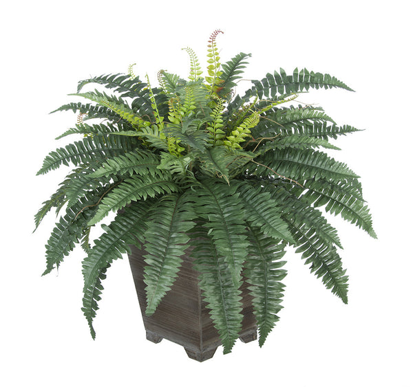 Artificial Fern in Small Washed Wood Planter