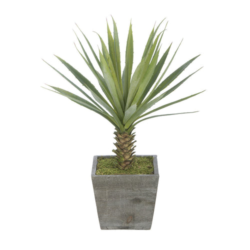 Baby Yucca in Washed Wood Cube House of Silk Flowers®