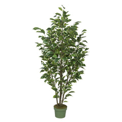 4-foot Ficus Tree House of Silk Flowers®