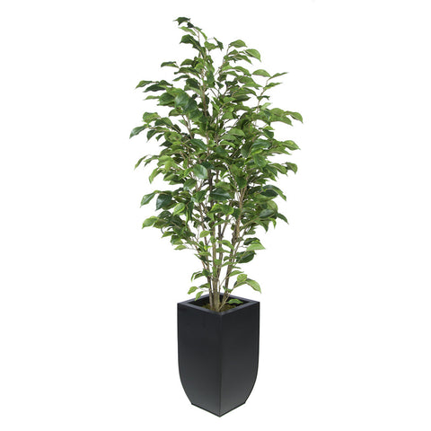 Artificial Green Ficus in Tapered Zinc House of Silk Flowers®