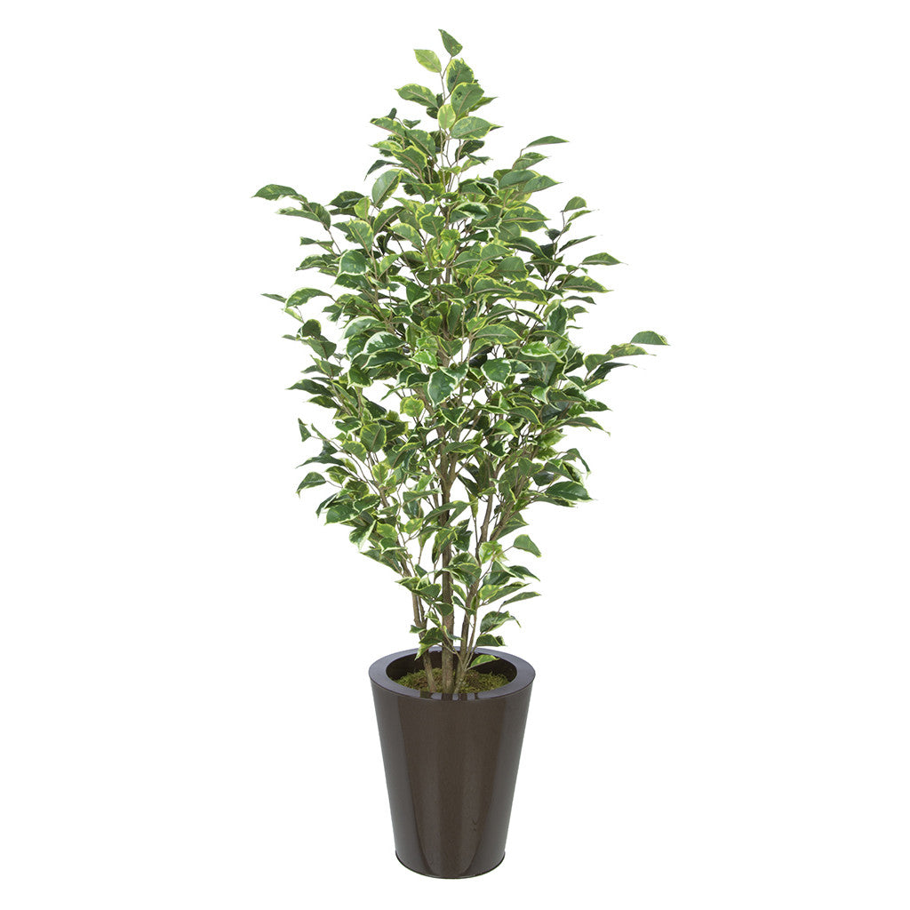 Artificial Variegated Ficus in Round Zinc