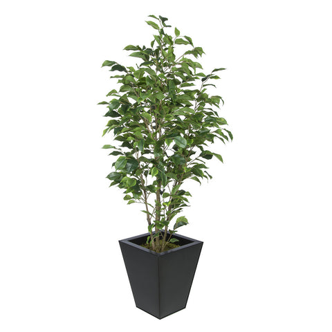 Artificial Green Ficus in Square Zinc