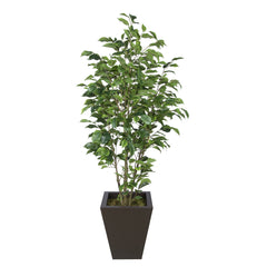 Artificial Green Ficus in Square Zinc House of Silk Flowers®