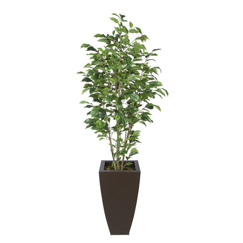 Artificial Green Ficus in Tapered Square Zinc
