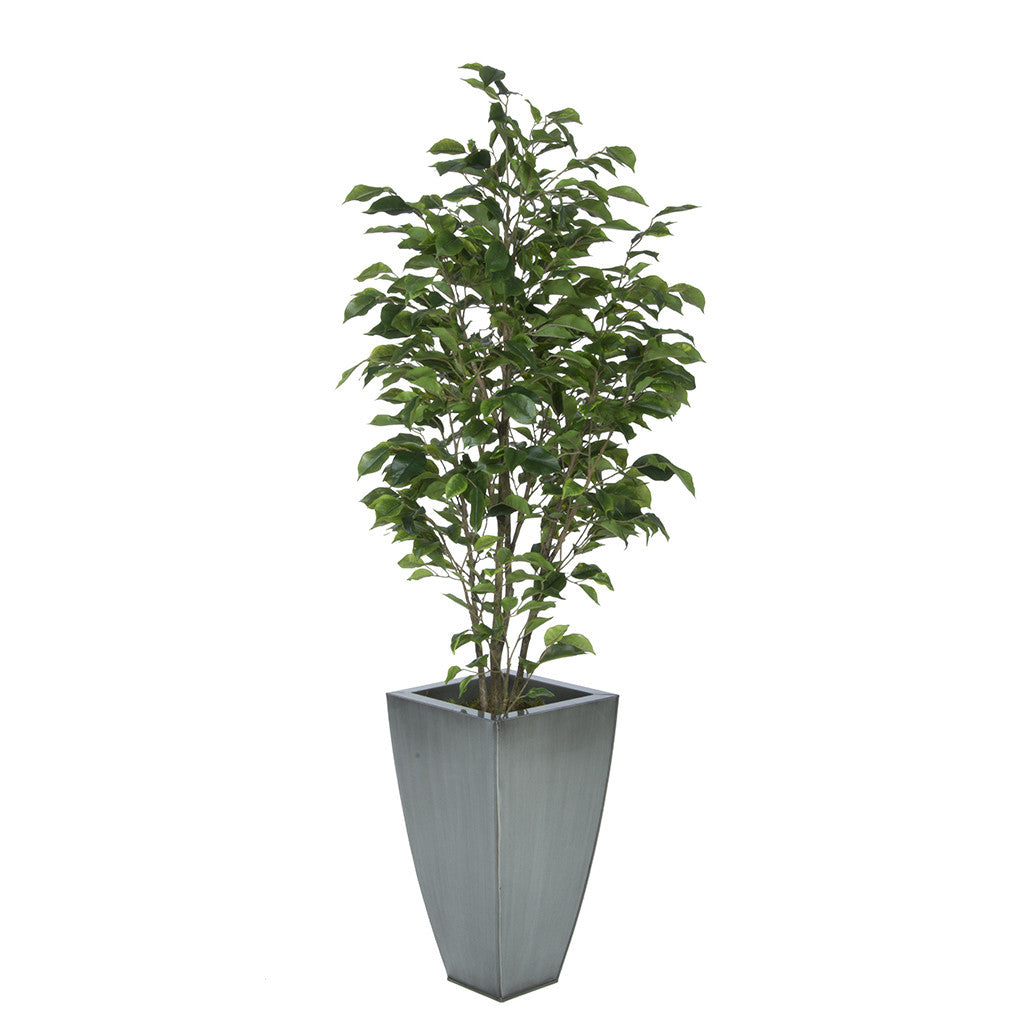Artificial Green Ficus in Tapered Square Zinc House of Silk Flowers®