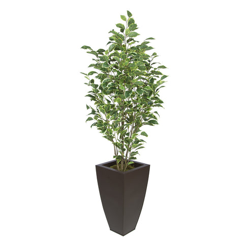 Artificial Variegated Ficus in Tapered Square Zinc