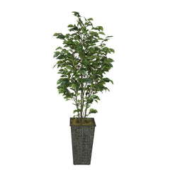 Artificial Green Ficus in Designer Square Metal House of Silk Flowers®