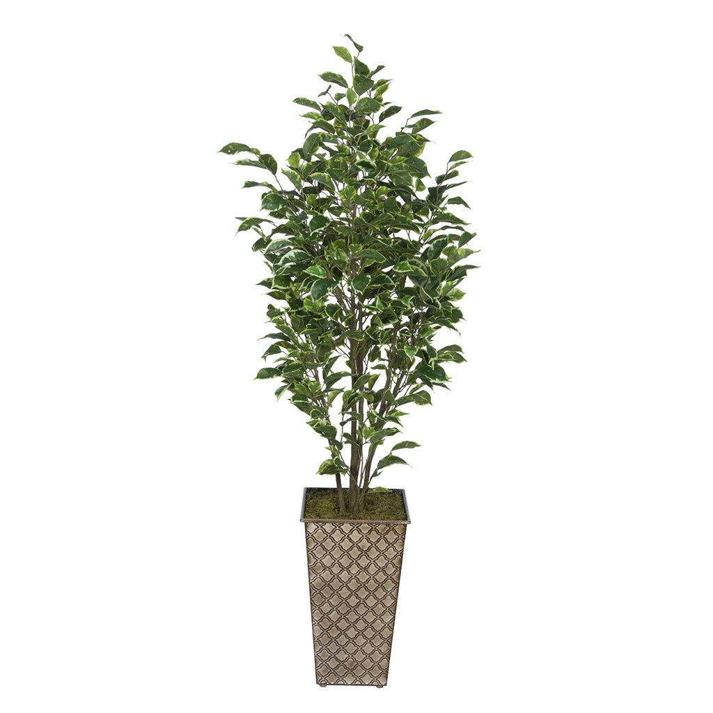 Artificial Variegated Ficus in Designer Square Metal